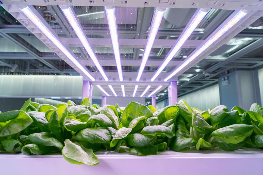 Idealne Oświetlenie Dla Roślin System Spectro Light