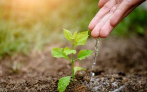 Jakie sa korzysci wykorzystania zraszaczy do nawadniania plantacji (2)